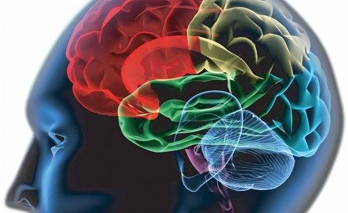 Мозг и зрачки