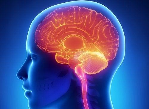 Влияние сахара на здоровье мозга