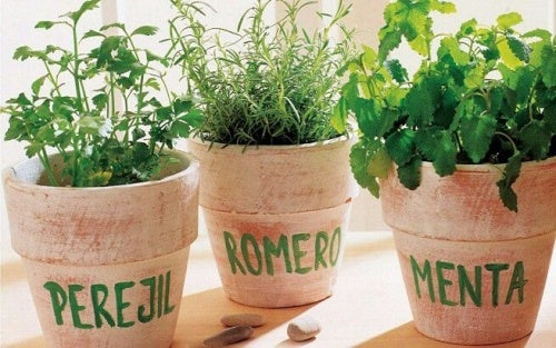 Розмарин, петрушка и мята: как вырастить их дома?