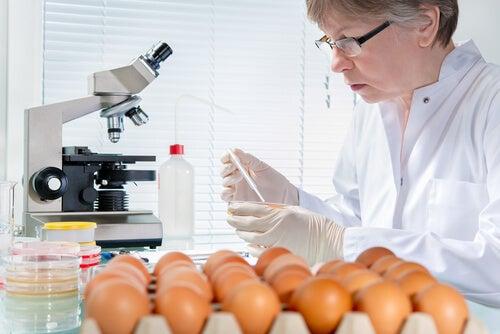 Свежесть яиц и сальмонелла