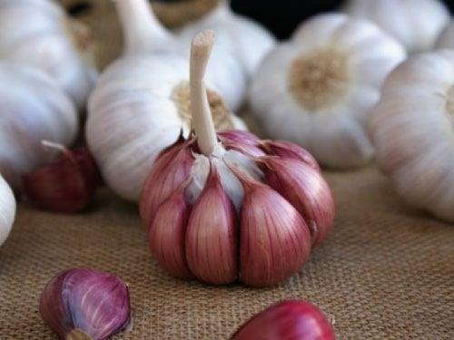 Среди всех сортов чеснока фиолетовый чеснок полезнее всего для гинекологического здоровья