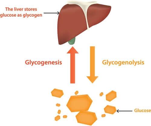 Глюкоза и повреждение печени