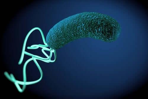 Изжога, диарея и вздутие живота? Виной всему бактерии!