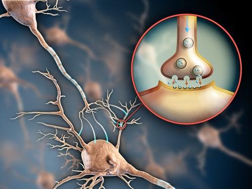 Нервная система и фибромиалгия