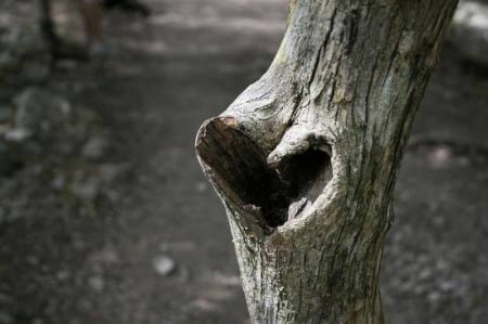 Сердце и бесполезная критика