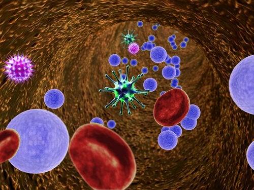 Чеснок и вредные бактерии в кишечнике