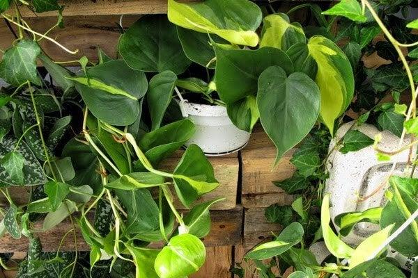Комнатные растения, которые могут представлять опасность