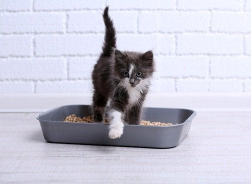 Детский тальк очистит кошачий туалет