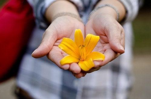 красивые руки и цветок