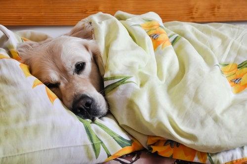 Собака и дезинфекция