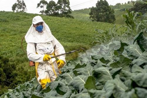 Что такое пестициды и чем они опасны