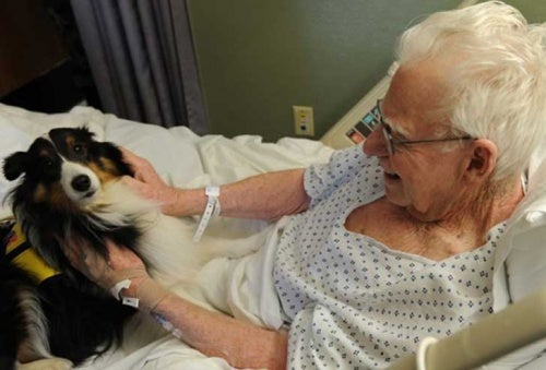 Госпиталь, где домашние животные навещают своих хозяев