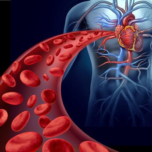 Чеснок очень полезен для сердечно-сосудистой системы