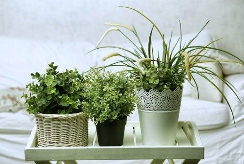 Растения для спальни