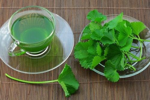 Чай из сельдерея на завтрак