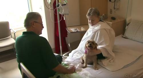 Домашние животные и пациенты