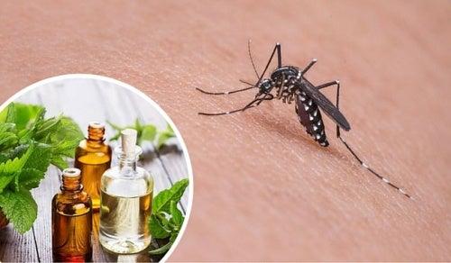 11 растений и специй, которые помогают отпугивать комаров