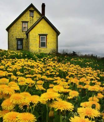 Пейзаж в желтых тонах и цвета