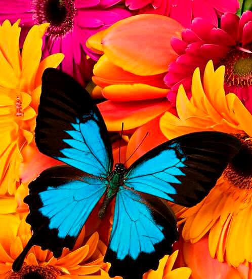 Цветная бабочка и яркие цвета