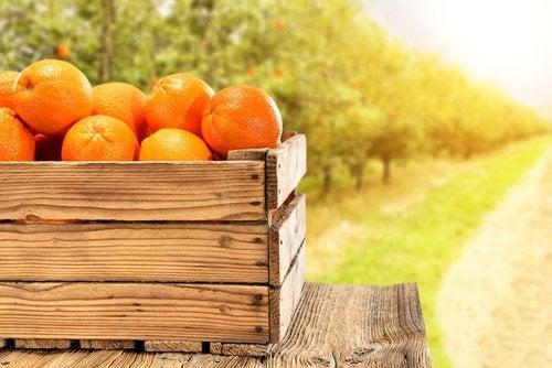 Апельсиновый сок и цитрусовые