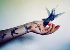 Колибри и интеллект