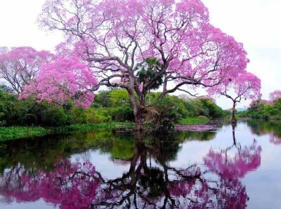 Природа снимает стресс