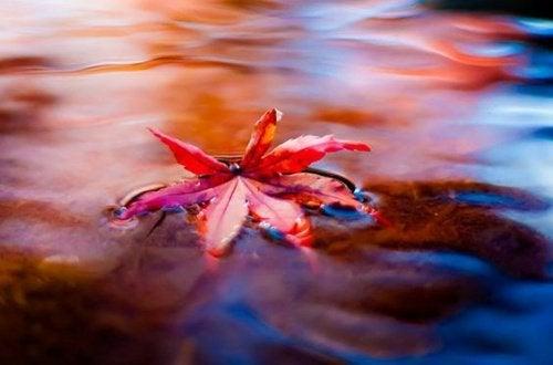 Лист в воде и стресс