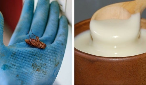 Домашние средства, от которых гибнут тараканы