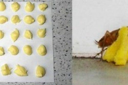 Яд и тараканы