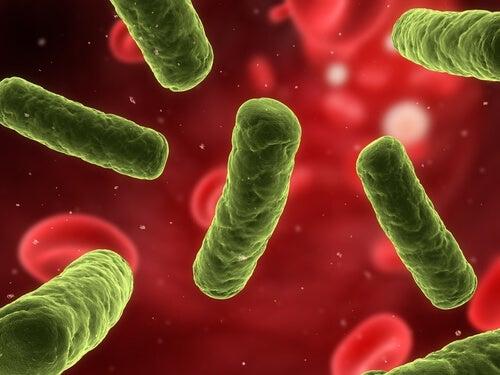 Укреплять иммунную систему и вагинальные инфекции