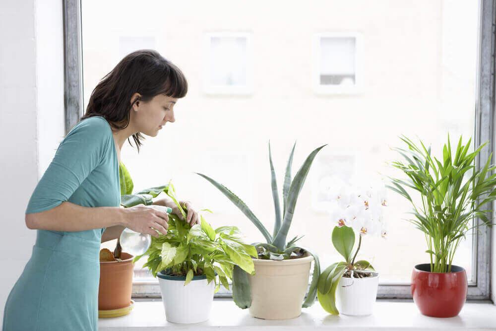 Женщина поливает цветы