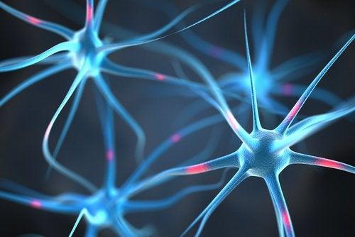 Нейронные связи и истощение