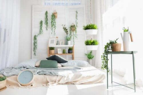 """Идеальные растения для спальни: 6 зеленых """"помощников"""" для отличного сна"""