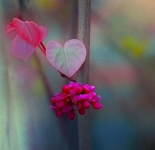 Сердце и разум