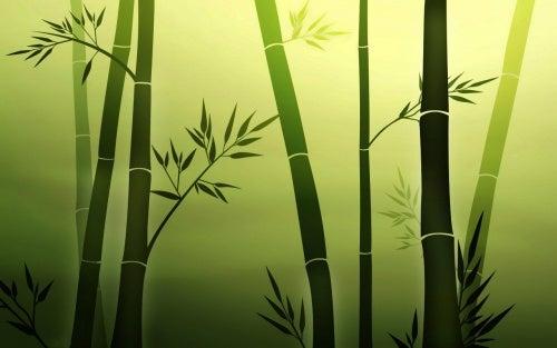 Бамбук и почему мы постоянно обижены