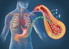 Диабет и поджелудочная железа