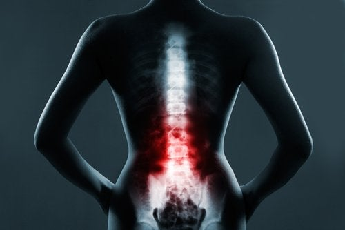Факты о позвоночнике и грудном отделе