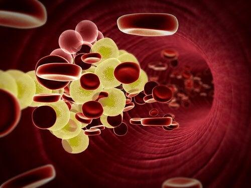 Семена чиа регулируют уровень холестерина в крови