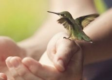 Отстраненность как птичка