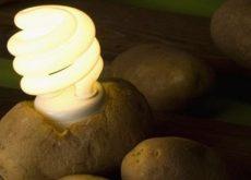 Как освещать комнату с помощью картофеля необычный эксперимент своими руками