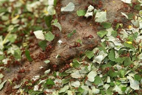 Корица отпугивает насекомых