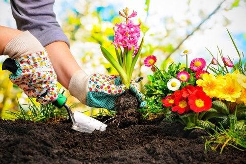 Корица лечит повреждения у растений