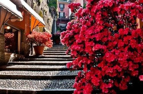Лестница с цветами чтобы преодолеть себя