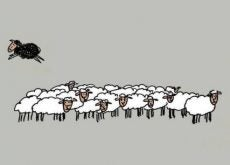 Овца и белая ворона