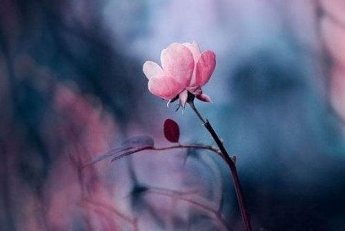 Цветок и умение любить