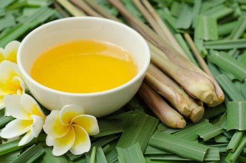 Масло цитронеллы: эффективный репеллент от комаров, клещей и блох