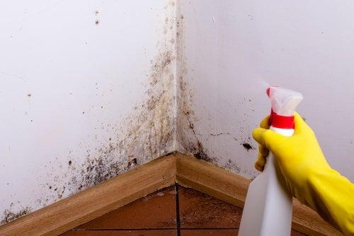 От повышенной влажности на стенах и потолке появились пятна? Мы знаем, как решить эту проблему!