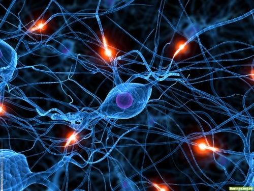 Воспроизведение клеток и 5 мифов о нашем организме