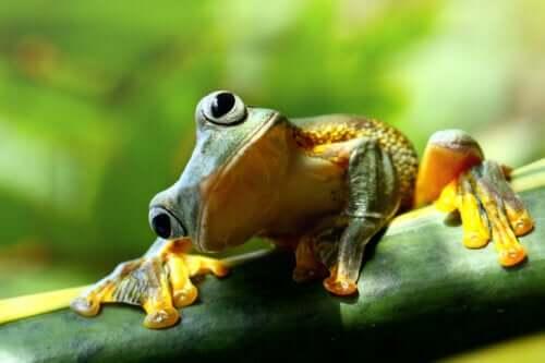 """Синдром """"лягушки в кипятке"""": когда не замечаешь, как жизнь меняется к худшему"""
