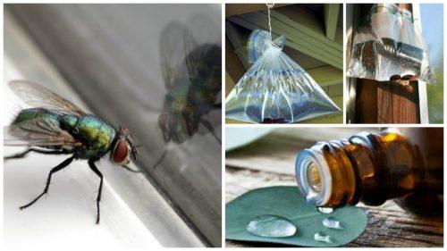 Мухи в доме: 7 натуральных средств против насекомых